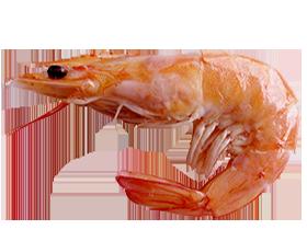440-krevetka-batan small